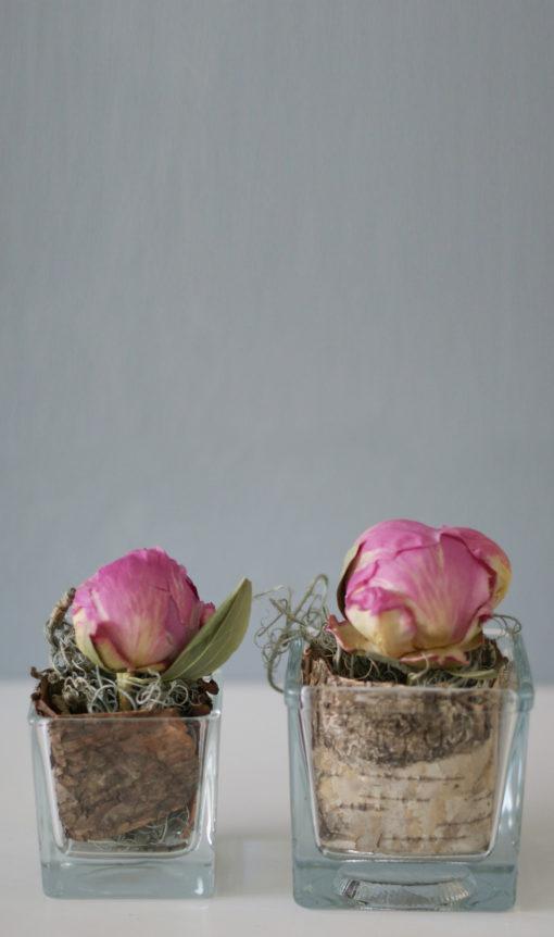 eurs séchées fleurs lyophilisées