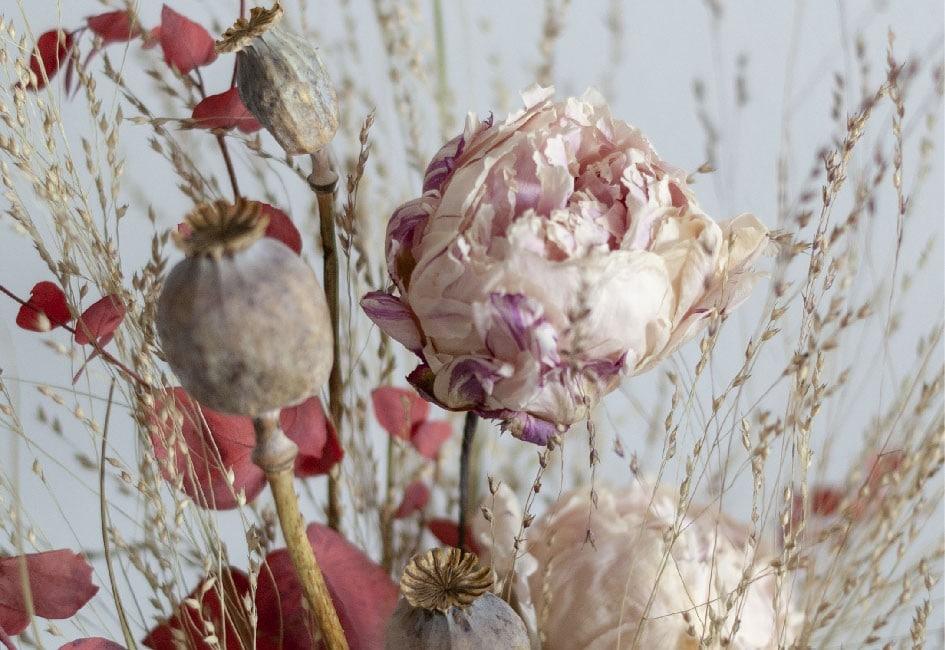 fleurs sechees fleurs lyophilisees
